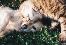 רכישת מזון לכלבים וחתולים